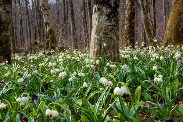 Красу закарпатського лісу показали на фото