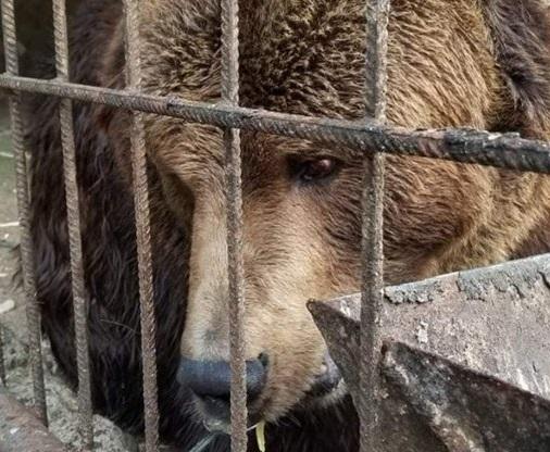 18-річного ведмедя привезли до Центру реабілітації на Закарпаття