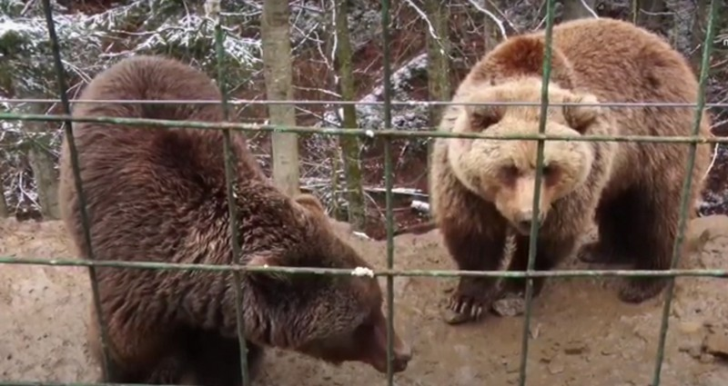 У Центрі реабілітації бурих ведмедів з'явився новий житель