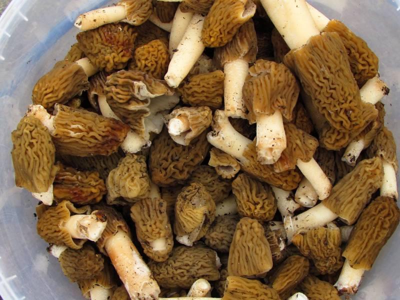 На Закарпатті вже збирають перші гриби