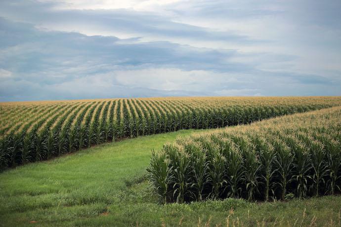 Ринок землі 2021: у Верховній Раді ухвалили земельний закон