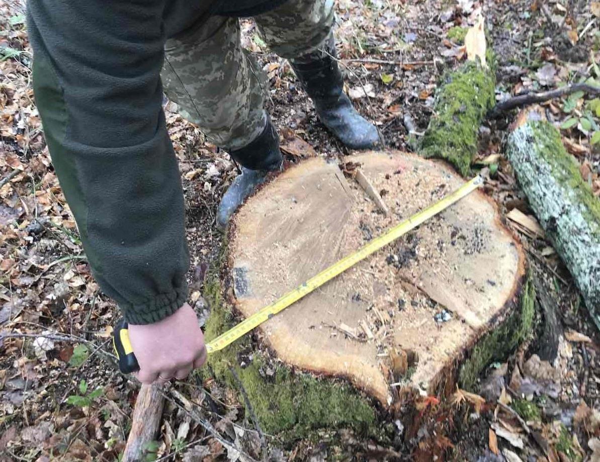 На Закарпатті виявили незаконну вирубку дерев