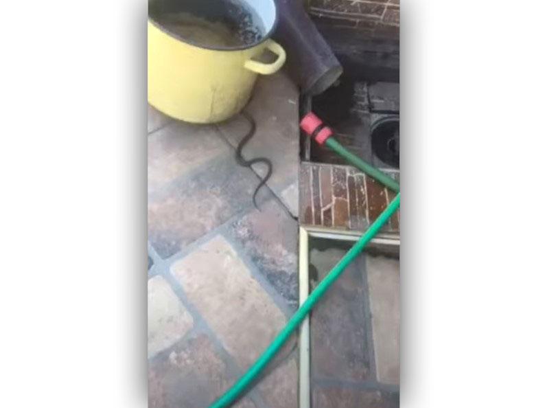 У Мукачеві жінка виявила у своєму дворі змію