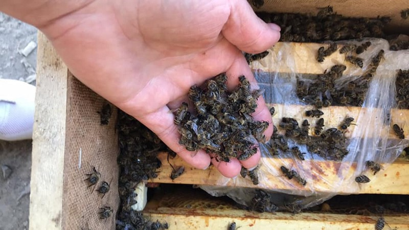 """В """"Укрпошті"""" прокоментували загибель 8 млн бджіл у вантажівці"""