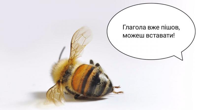 """""""Мертві"""" бджоли """"воскресли"""": соцмережі вибухнули жартами"""