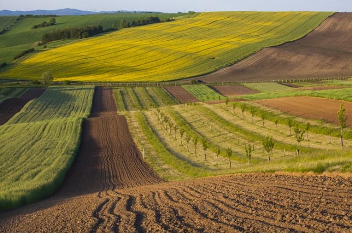 Українців хочуть змусити викупити свої земельні ділянки або оформити їх в оренду