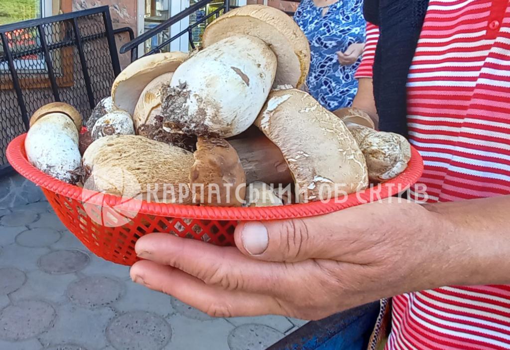 Скільки коштують білі гриби на Закарпатті