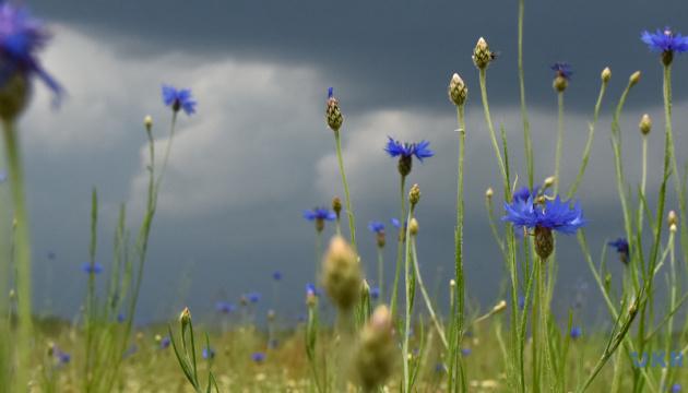 Справжня спека та короткочасні дощі: що обіцяють синоптики на тиждень
