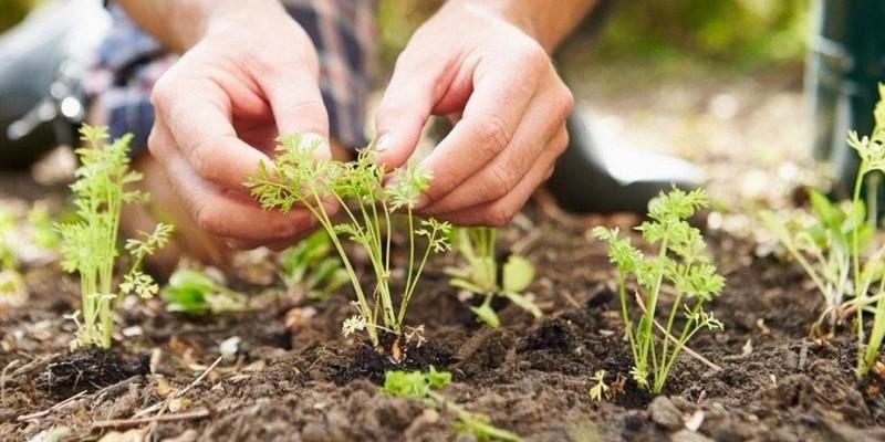 Українців, у яких є городи, змусять платити податки