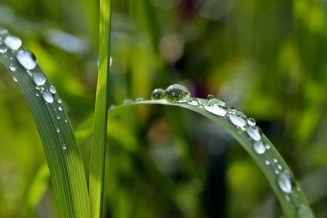 Дощі не відступлять: синоптики дали прогноз на тиждень