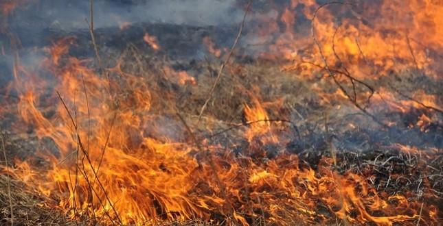 В Закарпатській області очікується надзвичайна пожежна небезпека