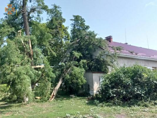 Знеструмлені села і повалені дерева: Закарпаттям пронеслась велика буря