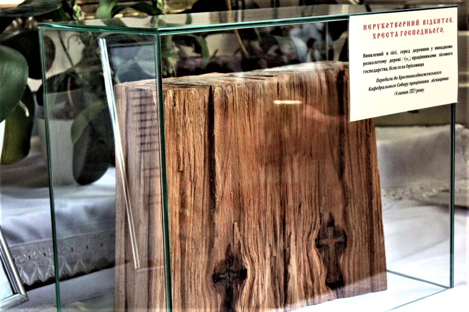 На Закарпатті під час рубки лісу в дереві виявили чітке зображення хреста