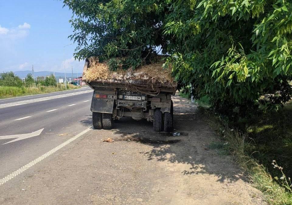 В Ужгороді прямо на ходу із вантажівки на дорогу падали мертві кури