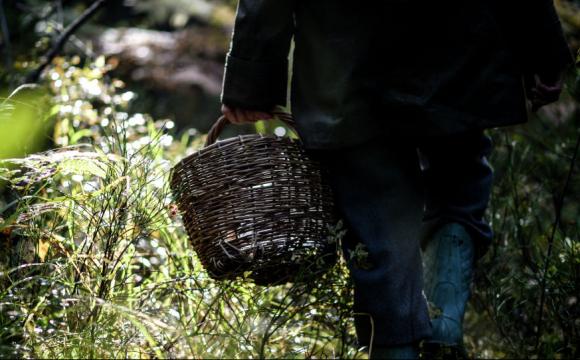 Закарпатець пішов по гриби і три дні блукав в районі селища Чинадієво