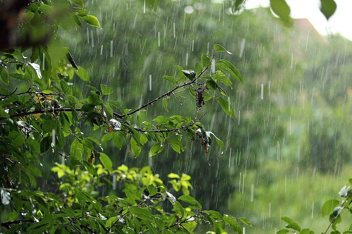 На Закарпаття суне негода із сильними дощами та вітром: коли очікувати