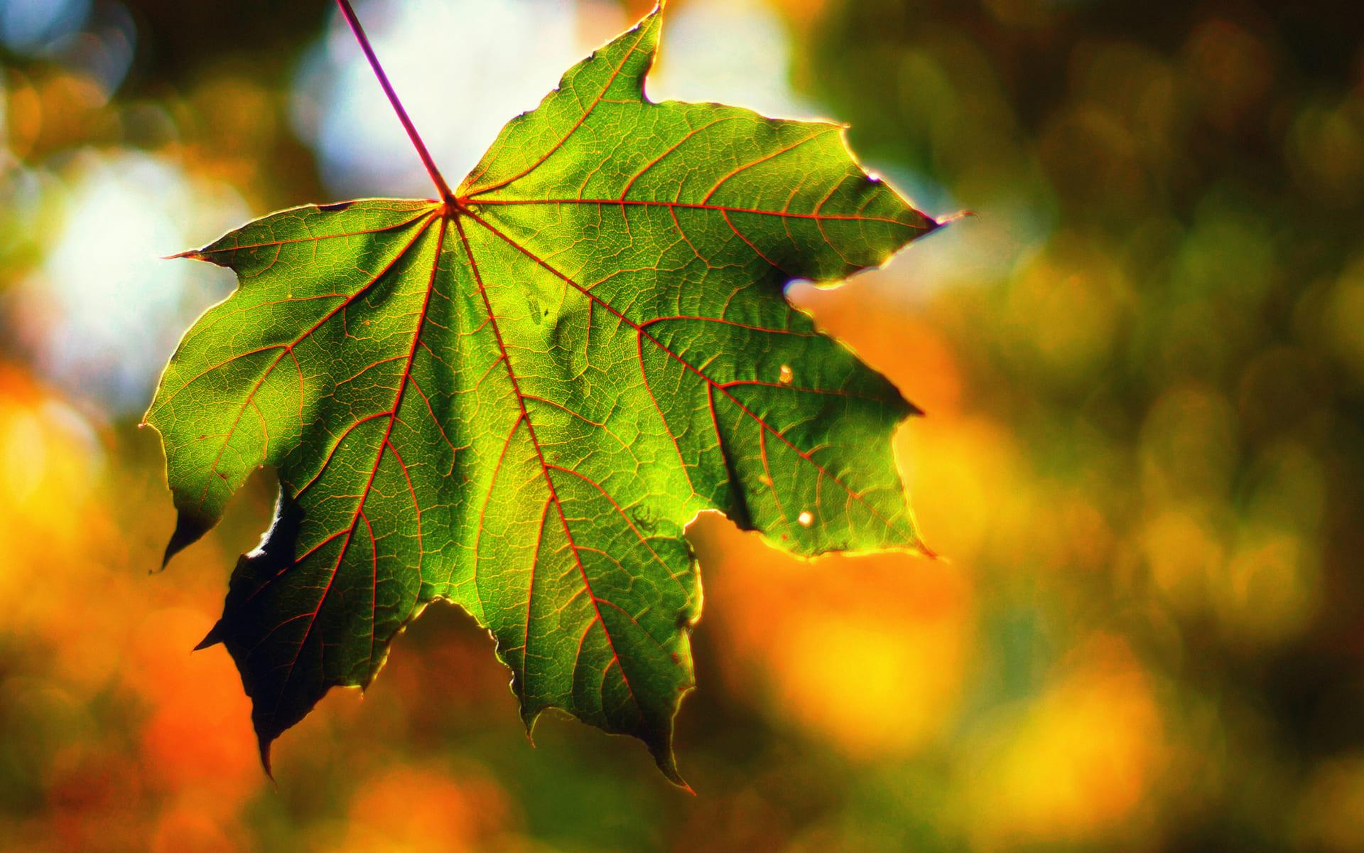 Погода на вересень 2021 року та якою буде осінь загалом