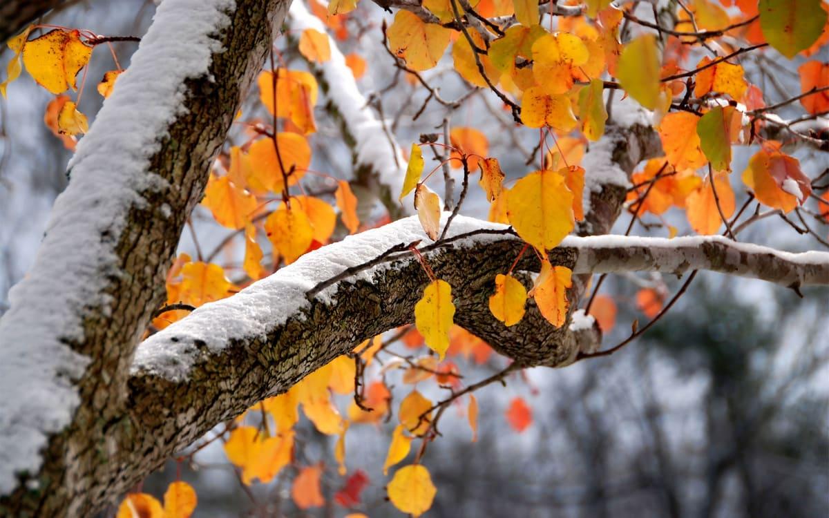 Якою буде погода на жовтень 2021 року: прогноз від трьох синоптиків