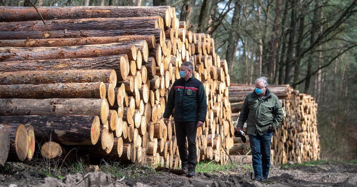 В Україні хочуть скасувати мораторій на експорт лісу-кругляка