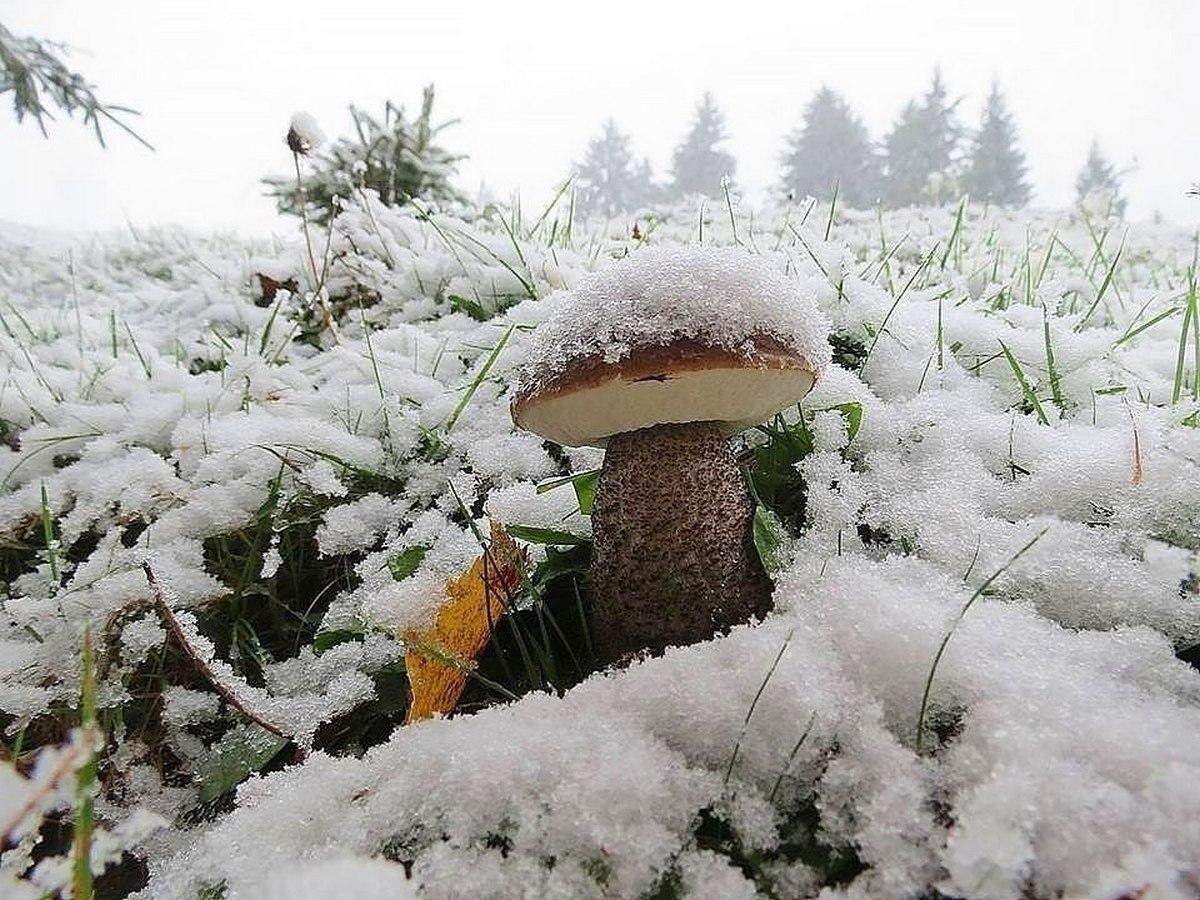 Перший сніг у Карпатах прогнозують вже за два дні