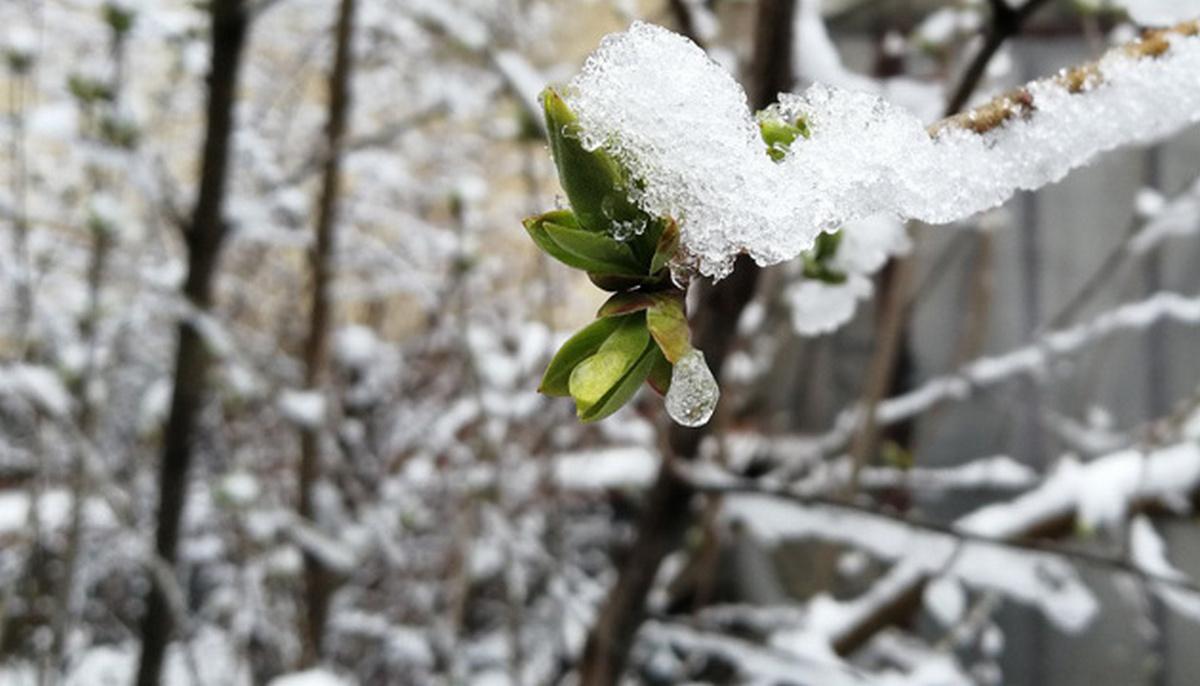 Синоптики попереджають закарпатців про мокрий сніг