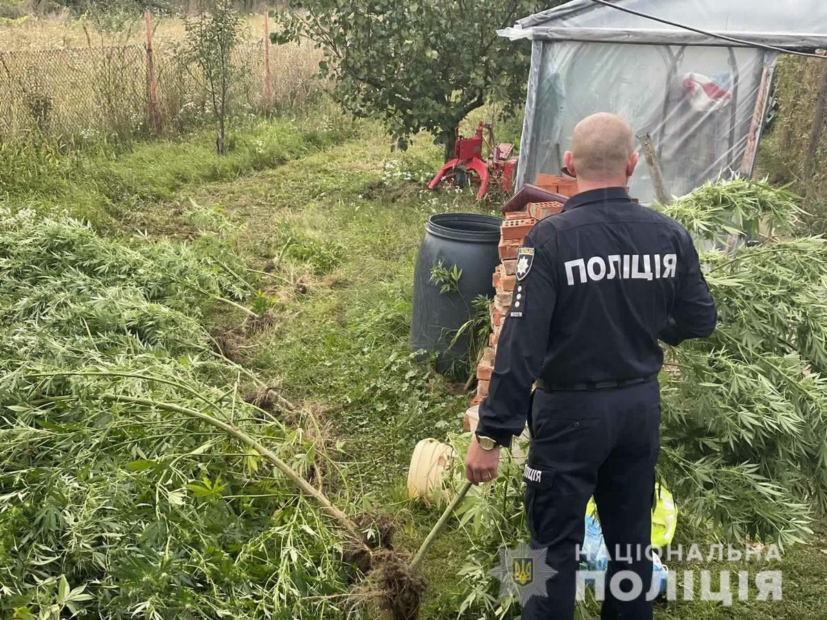 Закарпатець облаштував теплицю для вирощування нарковмісних рослин