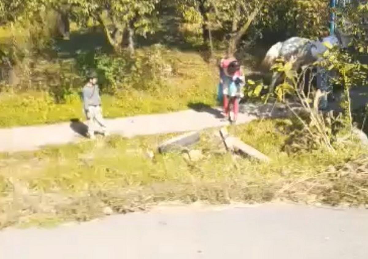 У Ракошині на трасі у кювет перекинувся віз