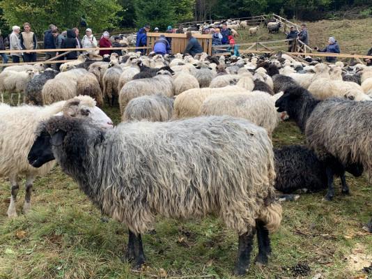 """""""Випускний"""" для вівчарів: у гірському селі провели колоритний захід"""