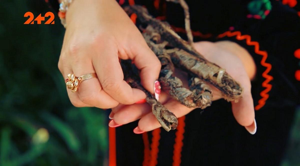 У Карпатах виявили невідому змію. Її укус вбиває, – ЗМІ