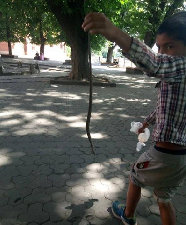 Біля філармонії ужгородець помітив хлопчика-рома зі змією у руках
