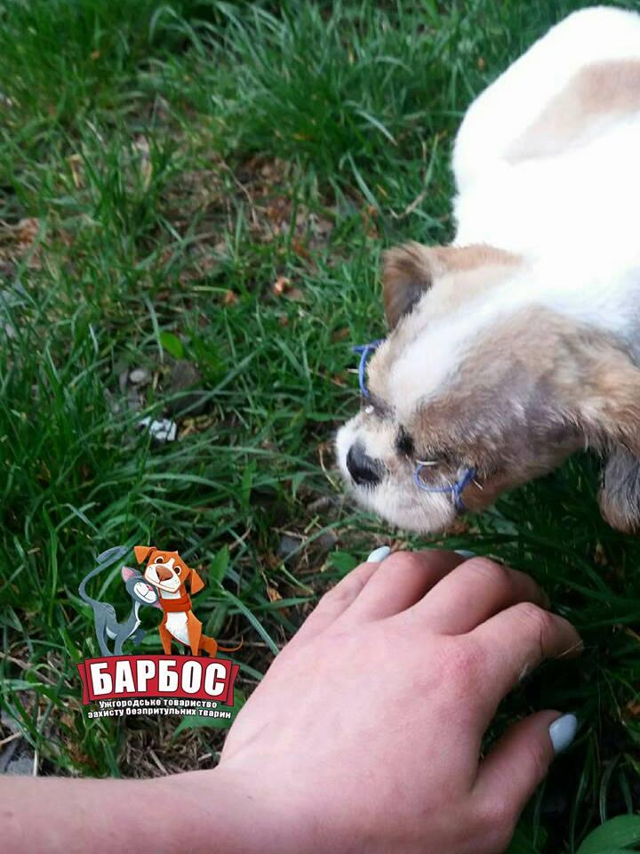 Собаку, яка через знущання людей залишилася без очей, прооперували