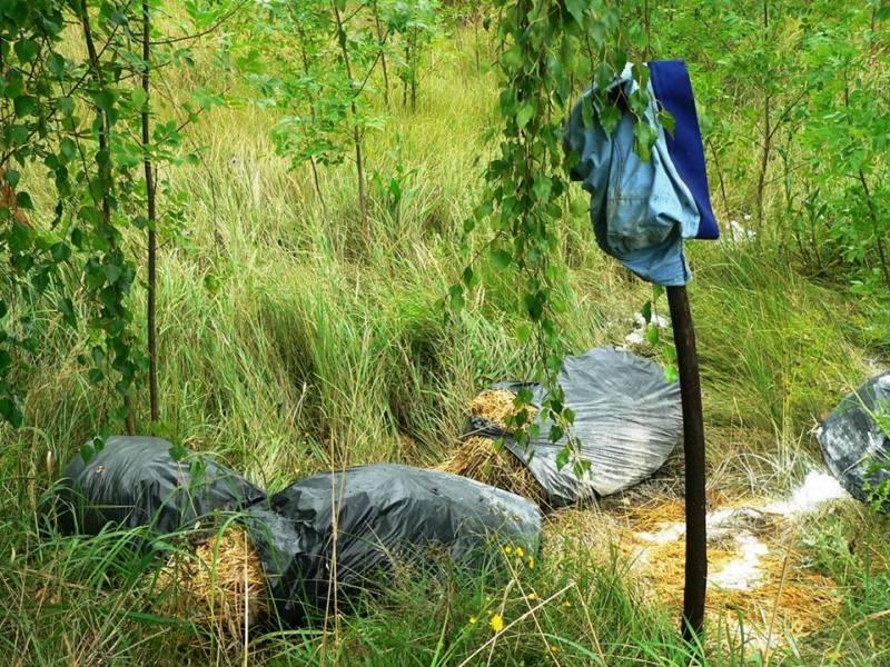 Мертвих свиней у пакетах на трасі біля села Зняцьово не знайшли