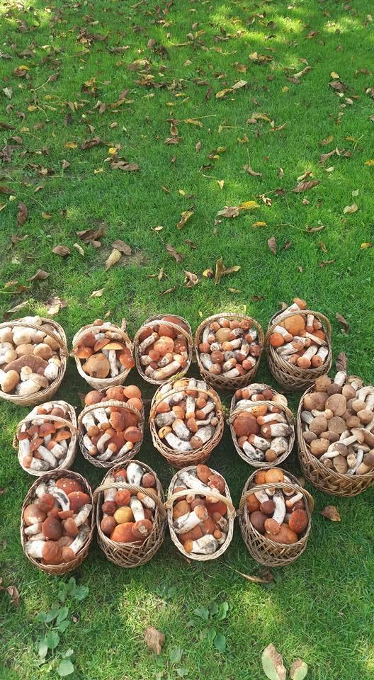 Оце так! Закарпатка назбирала 14 кошиків грибів