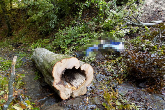 Закарпатець загинув під час заготівлі дров