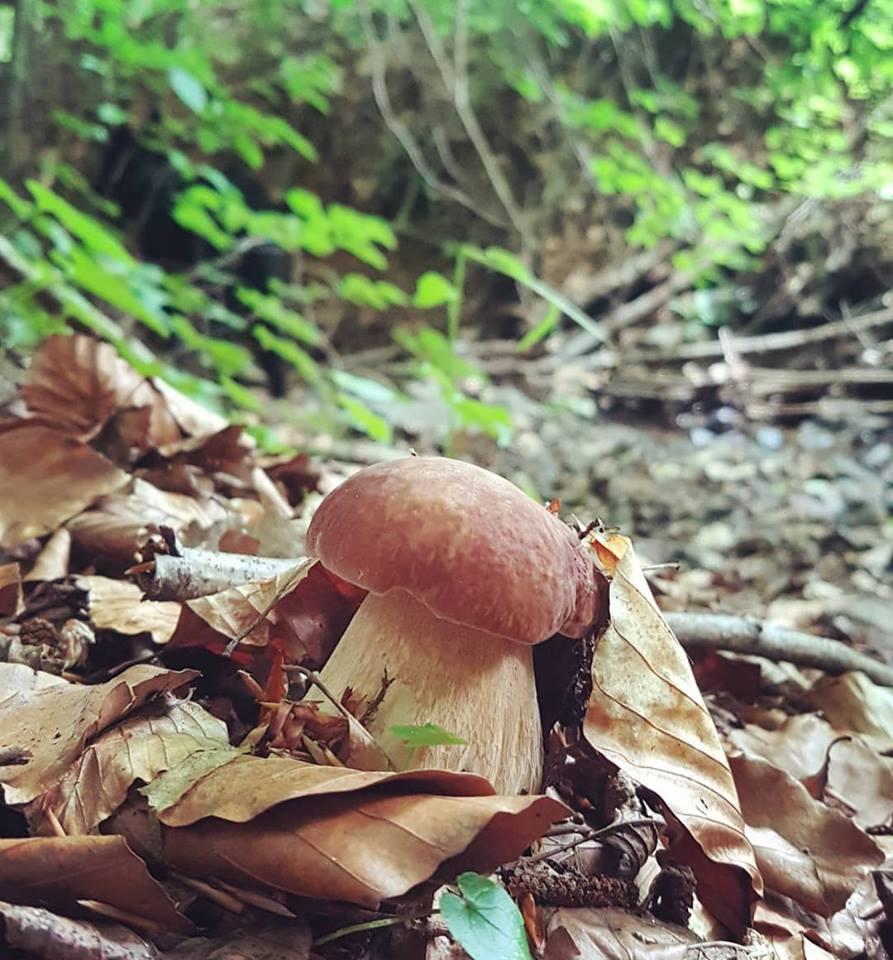 На Закарпатті активно триває грибний сезон (фото)